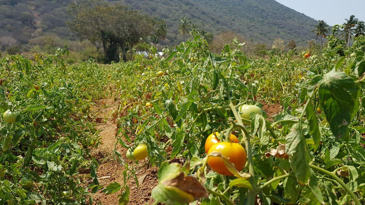 Google's Project Mineral is a Revolution in Agro Industry